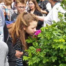 festiwal ogrodów_ogrodDZK2