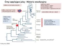 historia ewolucyjna - juka i ćma - kto lepszy
