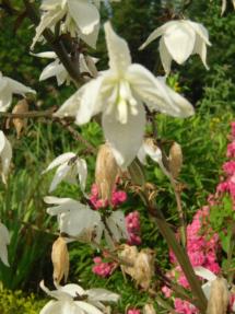 kwiat juki