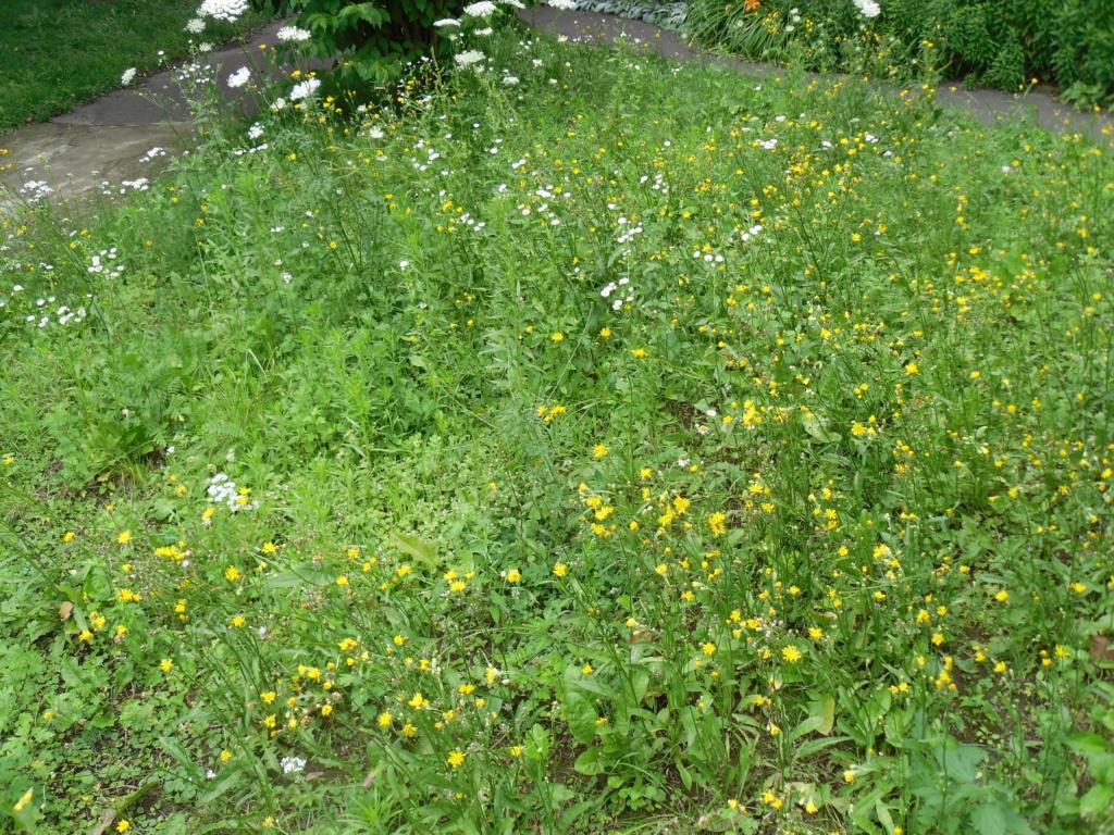 Kosić czy nie kosić trawników w naszym ogrodzie ?
