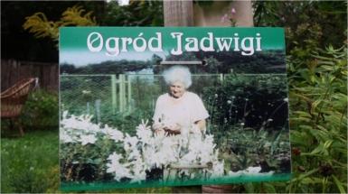 nie maa już lilii św. Antoniego w ogrodzie Jadwigi