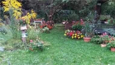 ogród Jadwigi